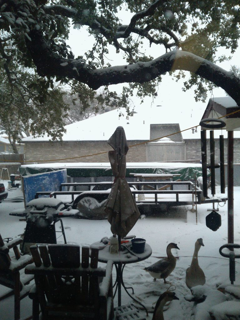 Texas backyard with snow, outdoor furniture, ducks, and geese